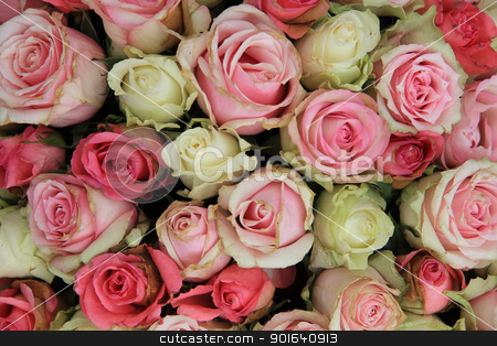 group of pink roses stock photo, big arrangement of pink roses, perfect as a background by Porto Sabbia