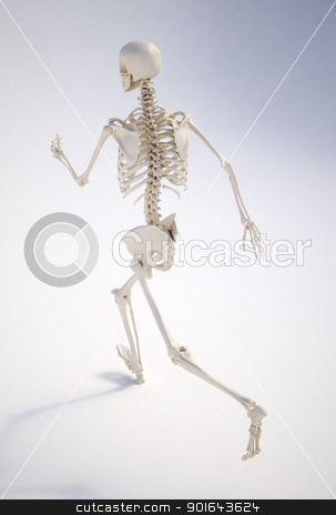 Running human skeleton - anatomically correct , realistic 3d rendering  stock photo, Running human skeleton - anatomically correct , realistic 3d rendering 