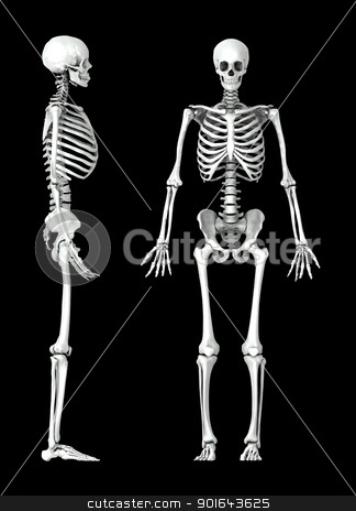 3D human skeleton medical illustration stock photo, 3D human skeleton medical illustration by Mopic