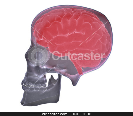 Skull scan with visible brain stock photo, Skull scan with visible brain