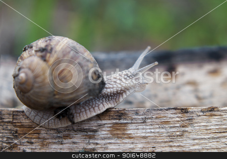 Walking the plank stock photo, Close up of snail walking the plank by Jenella