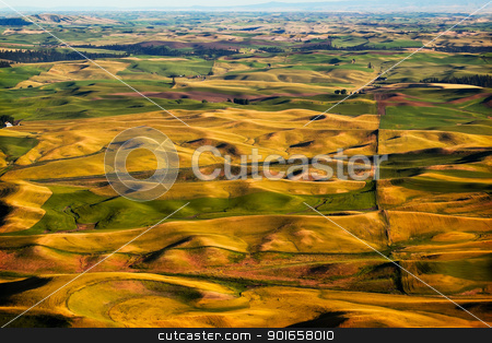 Green Yellow Wheat Grass Farms Palouse Washington State stock photo, Green Yellow Wheat Grass Fields Farms Palouse Washington State Pacific Northwest by William Perry