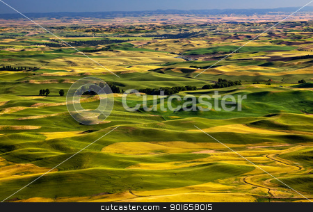 Yellow Green Wheat Fields and Farms from Steptoe Butte Palouse W stock photo, Yellow Green Wheat Fields Roads and Farms from Steptoe Butte at Palouse Washington State Pacific Northwest.  Steptoe Butte is the highest spot in the Palouse, Washington. by William Perry