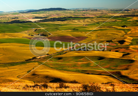 Red Farms Yellow Green Wheat Fields and Farms Palouse Washington stock photo, Yellow Green Wheat Fields Roads and Red Farms from Steptoe Butte at Palouse Washington State Pacific Northwest.  Steptoe Butte is the highest spot in the Palouse, Washington. by William Perry