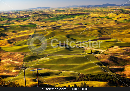 Green Wheat Grass Palouse Washington State stock photo, Green Wheat Grass Fields Telephone Poles Palouse Washington State Pacific Northwest by William Perry