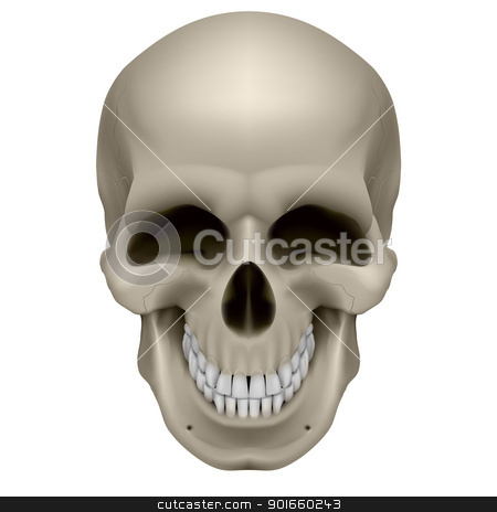 Human Skull stock photo, Freaky Human Skull. The emotion of joy. Illustration on white by dvarg