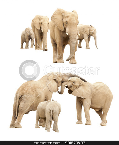 Family of Elephants Isolated stock photo, Set of Baby and Adult Elephants Isolated on a White Background. by Andy Dean
