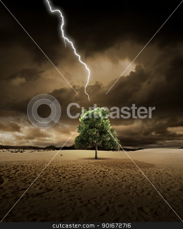 Lighting on desert tree stock photo, Lighting is about to hit a treein the desert by Giordano Aita