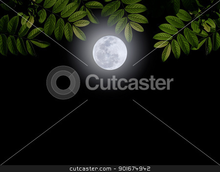 Full moon stock photo, Full moon with green leaf on darkness sky by Exsodus