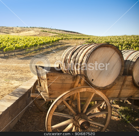 Grape Vineyard with Old Barrel Carriage Wagon  stock photo, Grape Vineyard with Vintage Barrel Carriage Wagon  by Andy Dean