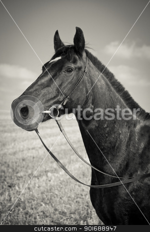 Black Horse stock photo, Portrait of black horse - Sepia Toned - Vintage Style by Dmitry Pistrov