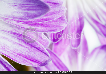 cropped image of flower petals stock photo, cropped image of flower petals by Dunning Adam Kyle