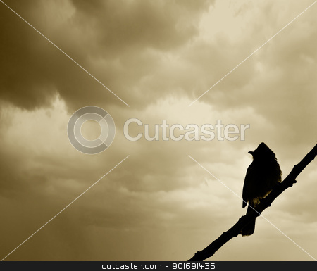 Bird waiting for Monsoon stock photo, Bird Waiting for Monsoon at the Beginning of the Rainy Season With Dark Clouds in the Background by Rahul Kumar