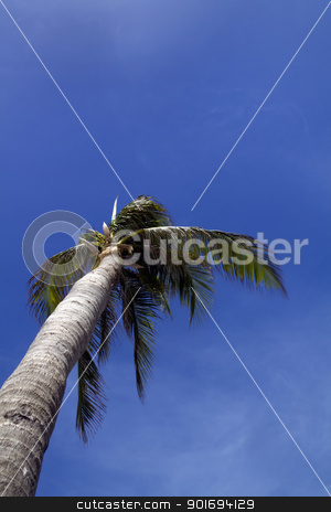 Palm Tree stock photo, A palm tree blowing in the wind with a blue cloudy sky  by Kevin Tietz