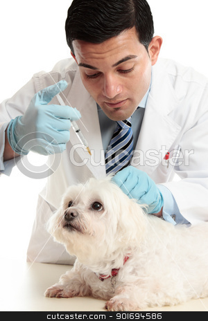 Vet injection to dog's scruff of neck stock photo, A veterinarian giving an injection into the scruff of a dog's neck. by Leah-Anne Thompson