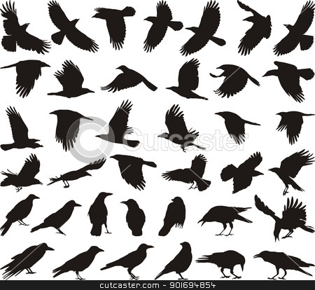Bird carrion crow stock vector clipart, black isolated vector silhouettes of carrion crow on the white background by Vladim?