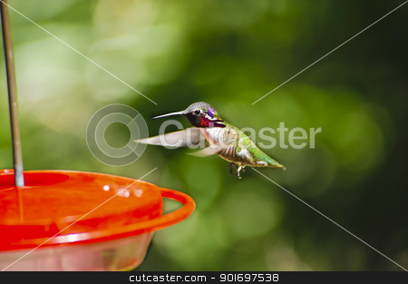 Hummingbird stock photo, A hummingbird hovering at a feeder, wings showing motion by Don Fink