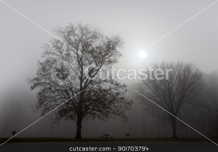Landscape of fog stock photo, Trees in early morning fog  by Sreedhar Yedlapati