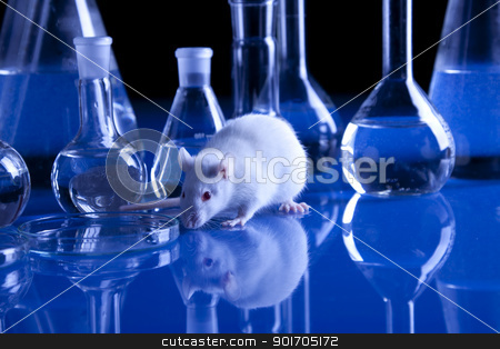 Rats in laboratory stock photo, Rats in laboratory. Experiments on animals by fikmik