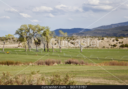 irrigated meadow in mountain valley stock photo, green irrigated meadow in a  mountain valley of Green River near Browns Park, Utah by Marek Uliasz