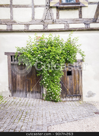 roses stock photo, An image of some roses and the old wooden doors by Markus Gann