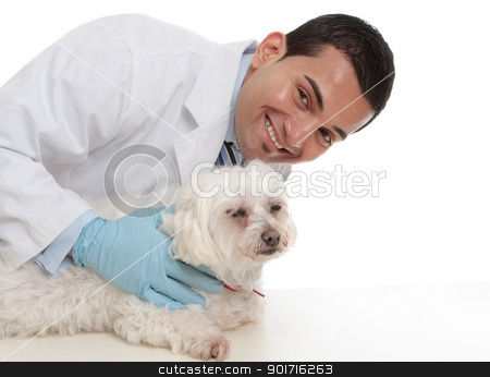 Friendly caring vet with a sick animal stock photo, A smiling caring vet with a sick maltese terrier pet dog. by Leah-Anne Thompson