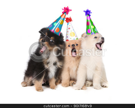 Puppies Singing Happy Birthday Wearing Party Hats  stock photo, Humorous Puppies Singing the Happy Birthday Song Wearing Silly Hats by Katrina Brown
