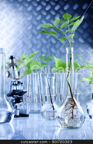 Seedlings in laboratory stock photo, Plants in laboratory by fikmik