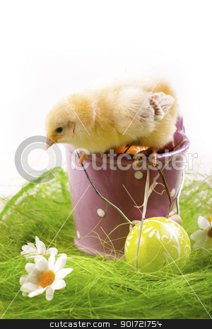 Easter Chicken, holiday concept stock photo, Easter Chicken, holiday concept by fikmik