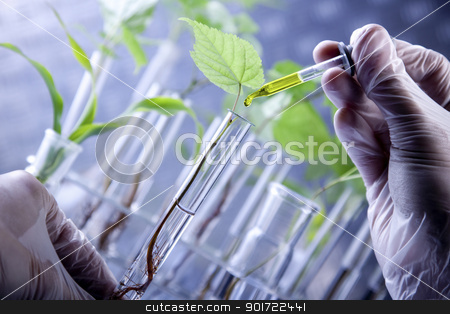 Plants in laboratory. Genetic science stock photo, Plants in laboratory. Genetic science by fikmik