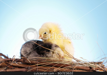 Easter animals stock photo, Easter animals by fikmik