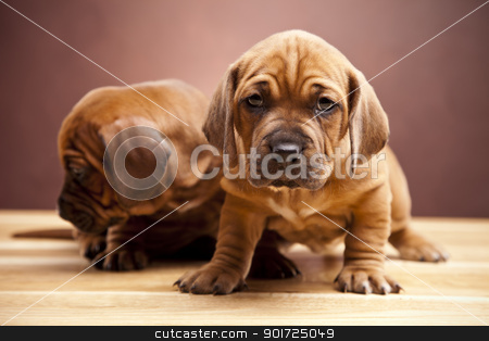 Young Cute dogs! stock photo, Young Cute dogs! by fikmik