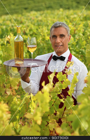 Waiter serving white wine in a vineyard stock photo, Waiter serving white wine in a vineyard by photography33