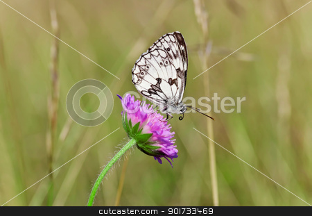 Butterfly stock photo, This image shows a macro from a butterfly by kirschner