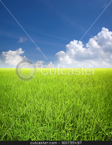 Rice field stock photo, Landscape of rice field in Asia, Malaysia, Sekinchan. by szefei