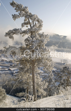 Snowy winter tree. stock photo, On a background of a winter landscape trees in snow. A fog. by Yury Ponomarev