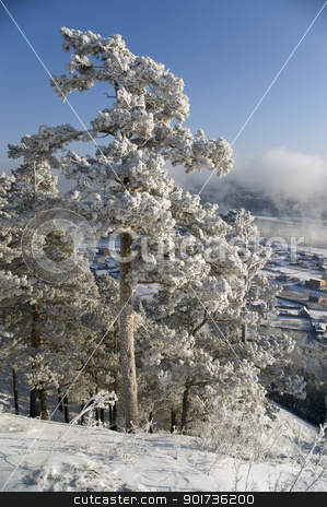 Winter landscape stock photo, On a background of a winter landscape trees in snow. A fog. by Yury Ponomarev