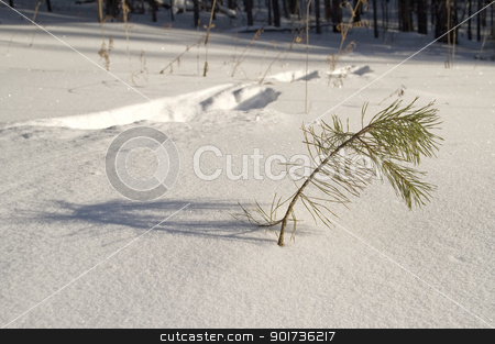 Traces on snow. stock photo, Traces of an animal on snow. by Yury Ponomarev