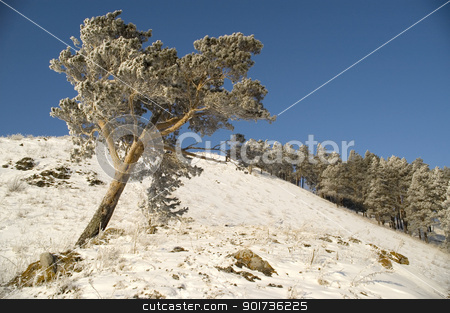 Snowy winter tree. stock photo, A lonely tree in snow on a rock. by Yury Ponomarev