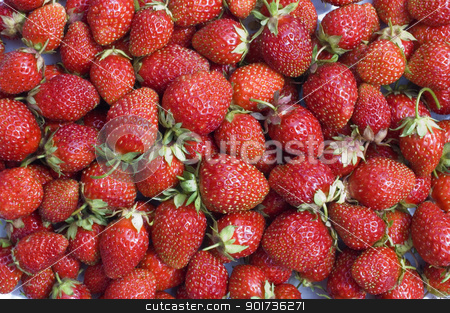 Strawberry. stock photo, Red, ripe wild strawberry. by Yury Ponomarev