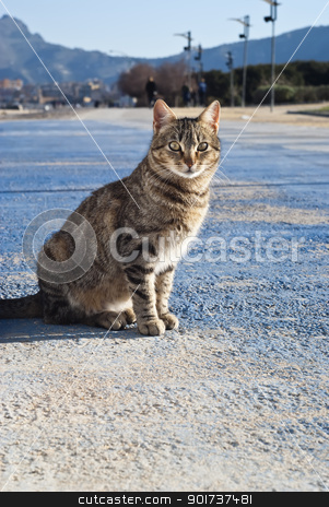 stray cat with mountains in the background stock photo, beautiful stray cat on the road with mountains in the background by Gandolfo Cannatella