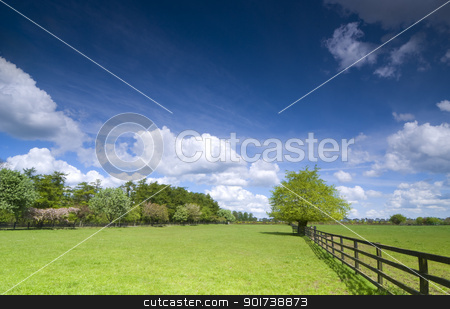 Tree on green field stock photo, Tree and fence on green field by Tiramisu Studio