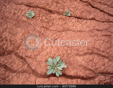 Drought. stock photo, Green bush on a background of dry ground. by Yury Ponomarev