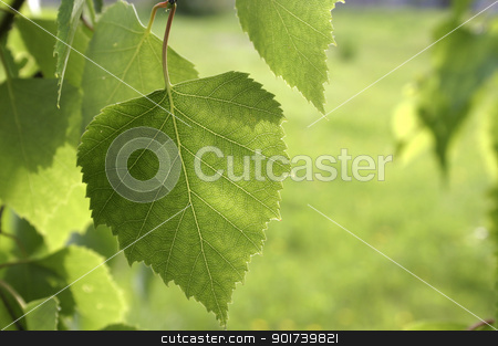 Green sheet.  stock photo, Summer. A small green sheet on a green background. by Yury Ponomarev