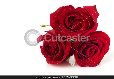 Roses stock photo, Image of roses on white background. by szefei