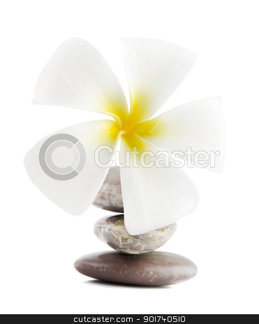 Frangipani on therapy stones stock photo, White frangipani and therapy stones on white background by szefei