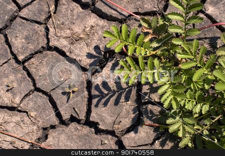 Green bush. stock photo, Green bush on a background of dry ground. by Yury Ponomarev