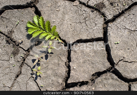 Green bush. stock photo, Green bush on a background of dry ground. by Yury Ponomarev