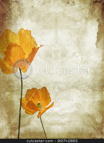 Pretty, orange, poppies grungy background  stock photo, Pretty, orange, poppies grungy background  by Juliet Photography