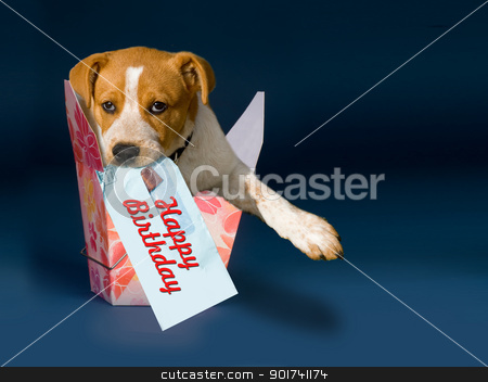 Happy Birthday. stock photo, Puppy in a to go box with room for your type. by WScott